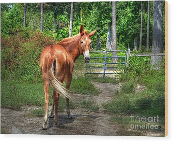 The Mule Wood Print by Kathy Baccari