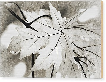 The Mysterious Leaf Abstract Bw Wood Print by Andee Design