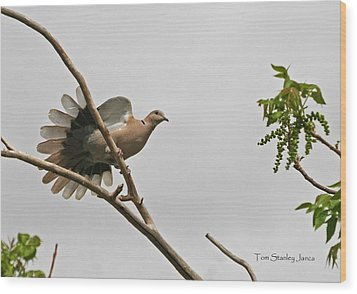 The New Dove In Town Wood Print by Tom Janca