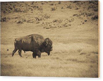 The Old Bull Wood Print