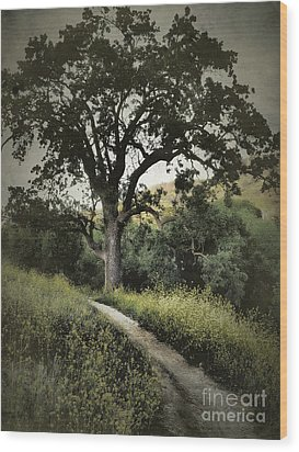 The Old Chumash Trail Wood Print