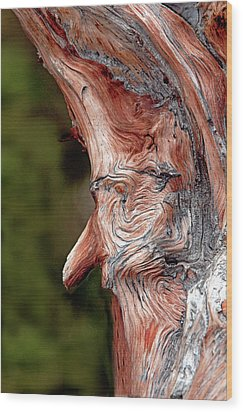 The Old Man In The Tree Wood Print