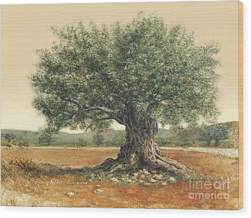 The  Old Olive Tree. By Miki Karni Wood Print by Miki Karni