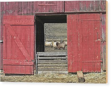 The Old Sheep Barn Wood Print by Olivier Le Queinec