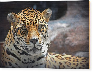 Wood Print featuring the photograph The Ole Leopard Don't Change His Spots by Lynn Sprowl