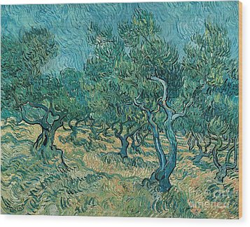 The Olive Grove Wood Print by Vincent van Gogh