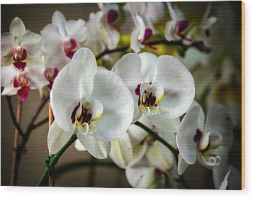 The Orchid Sisters And Backup Singers Wood Print by John Haldane