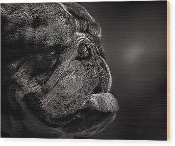 The Other Dog Next Door Wood Print by Bob Orsillo
