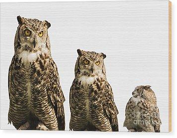 The Owl Trio Wood Print