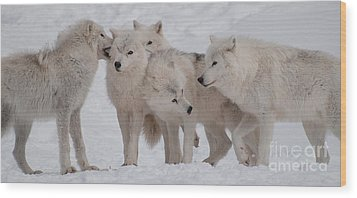 The Pack Wood Print by Bianca Nadeau