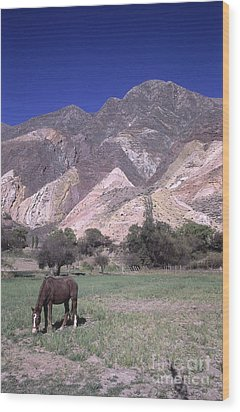 The Painters Palette Jujuy Argentina Wood Print by James Brunker