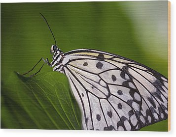 Wood Print featuring the photograph The Paper Kite Butterfly by Zoe Ferrie