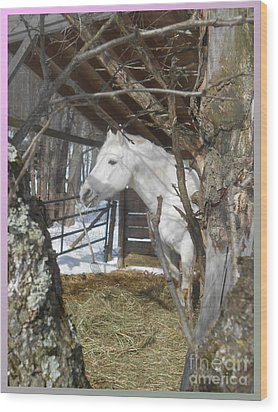 The Paso Fino Stallion At Home Wood Print by Patricia Keller