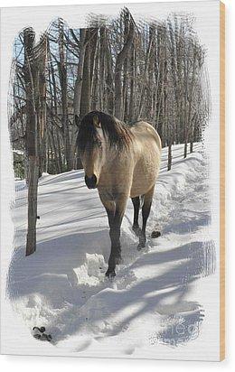 The Paso Fino Stallion Named Brio Wood Print by Patricia Keller