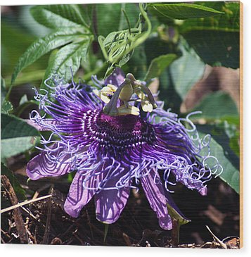 The Passion Flower Wood Print