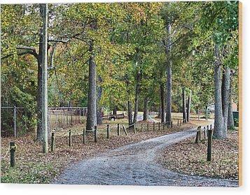 The Path Wood Print by Carolyn Ricks