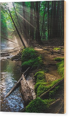 The Path That I Have Taken Wood Print