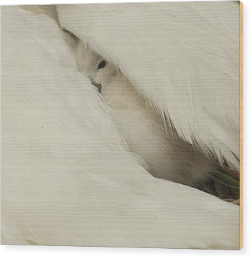 the Peak  Wood Print