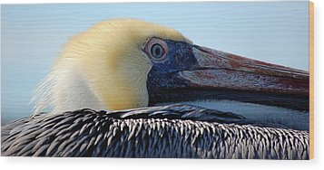 Wood Print featuring the photograph The Pelican by AJ  Schibig