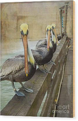 The Pelican Gang Wood Print