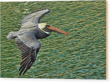 The Pelican Glide Wood Print by Pamela Blizzard
