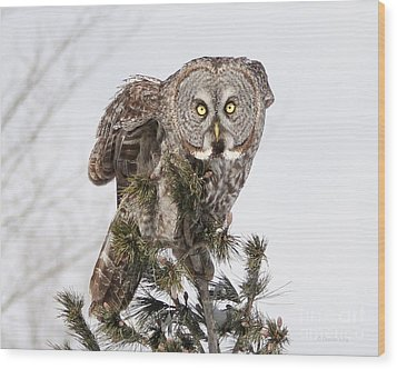 Wood Print featuring the photograph The Perching Prince by Heather King