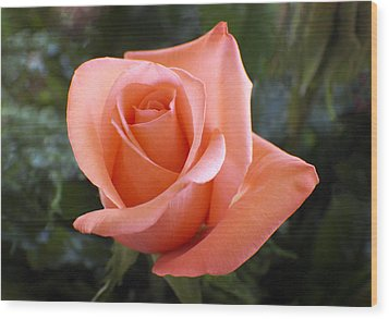 The Perfect Coral Rose Wood Print by Kurt Van Wagner