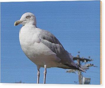 The Perfect Sea Gull  Wood Print