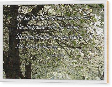 The Perfumed Cherry Tree 1 Wood Print