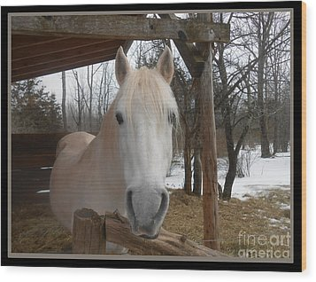 The Picture Perfect Paso Fino Stallion Wood Print by Patricia Keller