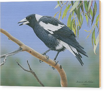 The Pied Piper - Australian Magpie Wood Print by Frances McMahon