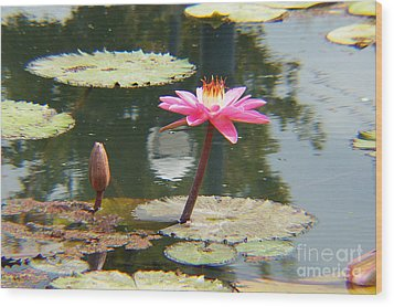 The Pink Water Lily With Lily Pads - One Wood Print by J Jaiam