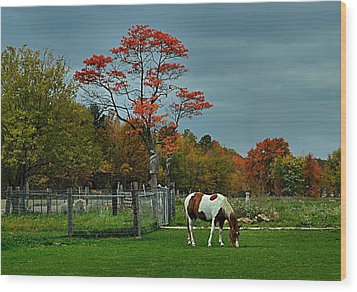 The Pinto Wood Print by Julie Dant