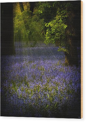 Wood Print featuring the photograph The Pixie's Bluebell Patch by Chris Lord
