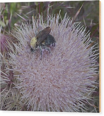 Wood Print featuring the photograph The Pollen Count Is High Today by John Glass