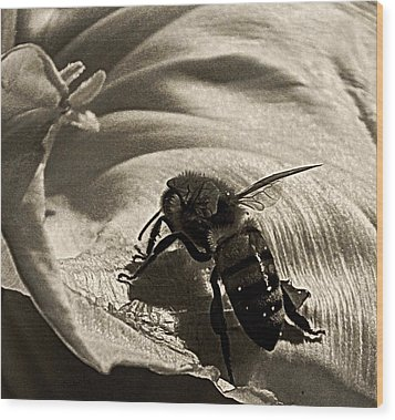 The Pollinator Wood Print by Chris Berry