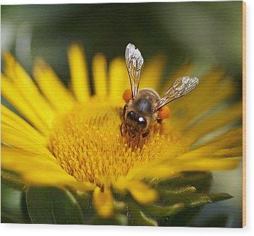 The Pollinator Wood Print by Rona Black