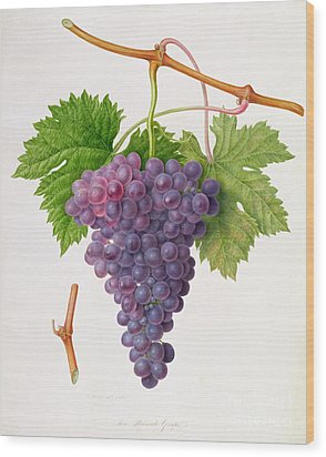 The Poonah Grape Wood Print by William Hooker
