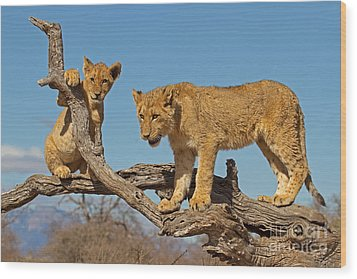 The Predatory Instinct Wood Print by Ashley Vincent