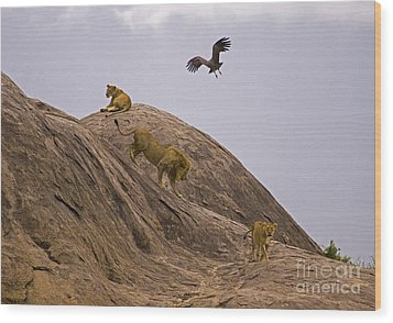 Wood Print featuring the photograph The Pride by J L Woody Wooden