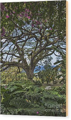 The Pride Of St. Kitts Wood Print