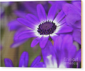 The Purple Daisy Wood Print by Sabrina L Ryan
