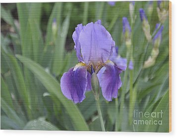 Wood Print featuring the photograph The Purple Iris by Cheryl McClure