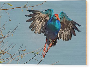 The Purple Swamphen Wood Print