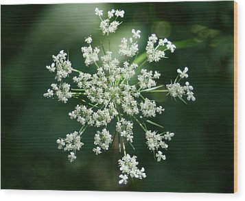 The Queen Of Lace Wood Print by Barbara S Nickerson