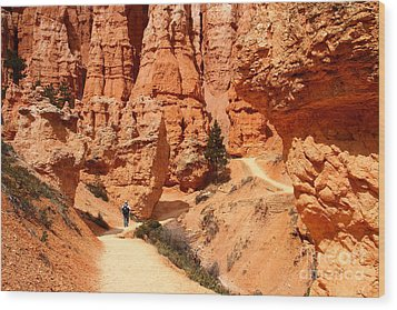 The Queens Garden Trail Bryce Canyon Wood Print by Butch Lombardi