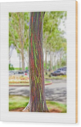 Wood Print featuring the photograph The Rainbow Eucalyptus Tree by MaryJane Armstrong