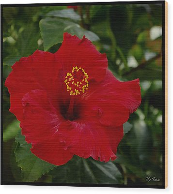 Wood Print featuring the photograph  Red Hibiscus by James C Thomas