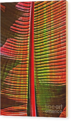 The Red Palm Wood Print by Joseph J Stevens