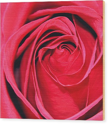 Wood Print featuring the painting The Red Rose Blooming by Karon Melillo DeVega